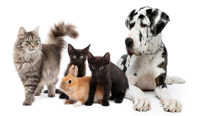 Pets Sitter – Canguro Para Mascotas